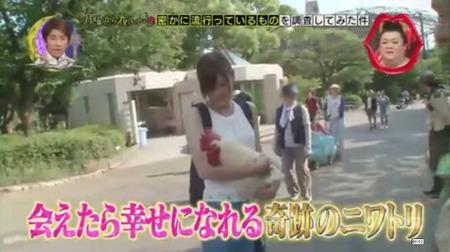奇跡のニワトリ・・・マサヒロ君 20