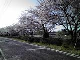 20090410桜吹雪