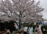 20100409花見