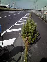 20090523富津岬0