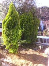 20121225復活した木