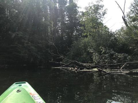 Kayak090720-1