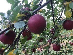 apple101720-4