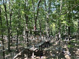treerunner053021-1