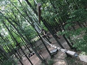 treerunner072520-2