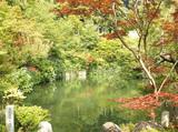 永観堂 池