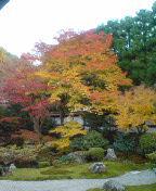 御寺の紅葉