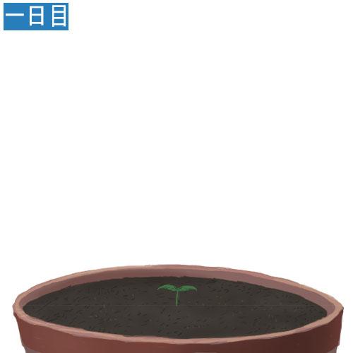 安価で植物を育てる