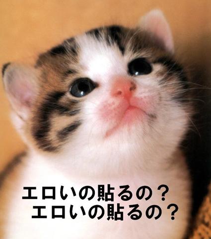 【にゃーん!!】 ぬこ画像祭りだ 【にゃーん!!】