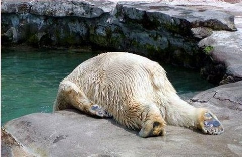 15-hungover-animals-who-have-no-regrets-funny-animal-photos7