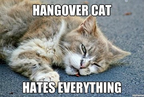 15-hungover-animals-who-have-no-regrets-funny-animal-photos8