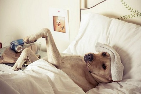 15-hungover-animals-who-have-no-regrets-funny-animal-photos3
