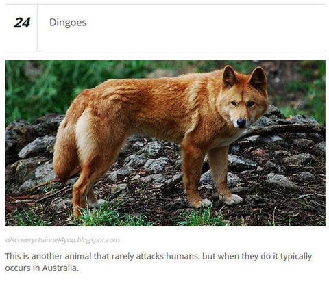 animals_who_are_known_for_causing_human_deaths_640_02