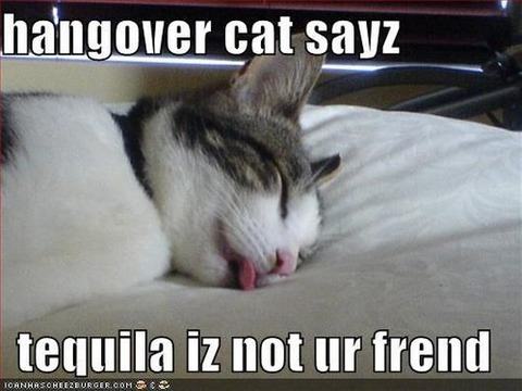 15-hungover-animals-who-have-no-regrets-funny-animal-photos14