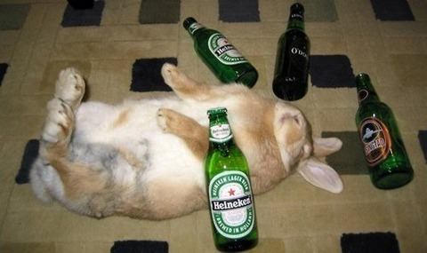15-hungover-animals-who-have-no-regrets-funny-animal-photos13