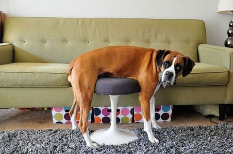 pets_dont_always_get_how_human_furniture_works_640_04