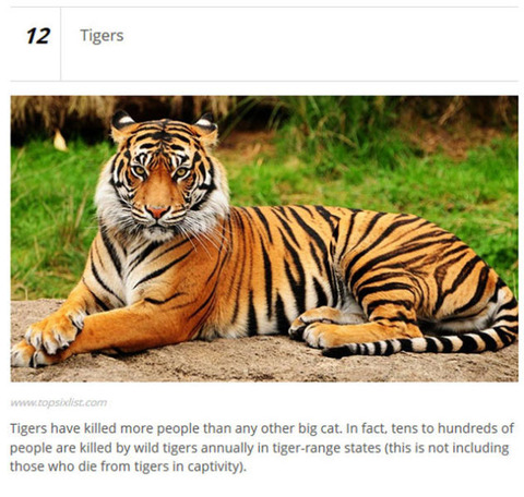 animals_who_are_known_for_causing_human_deaths_640_14