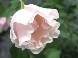 第16回 国際バラとガーデニングショウ