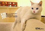 10W galleryの恒例行事の猫好きフェスティバル
