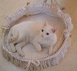 10W gallery 猫のクーとチチ
