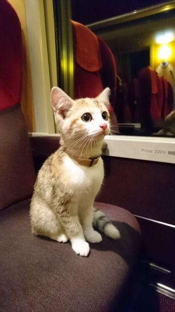 フランスの迷い猫、車掌の機転で飼い主見つかる