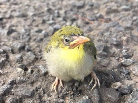 メジロとかいうクッソ可愛い鳥