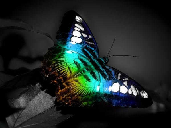 美しい生き物も居るわけです