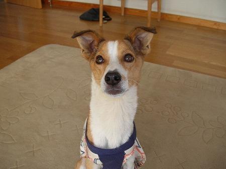 茜さんちの犬 サムネイルなし