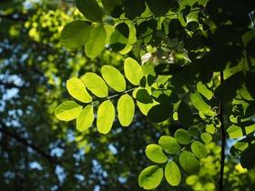 leaf-499024_1920
