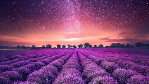 starry_sky_lavender_field-1280x720