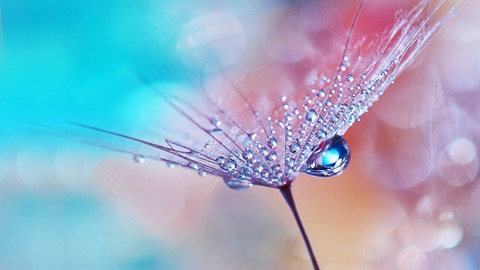 dew_drops_on_flower-1280x720