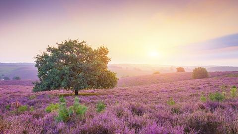 purple_landscape_sunrise_4k-1280x720