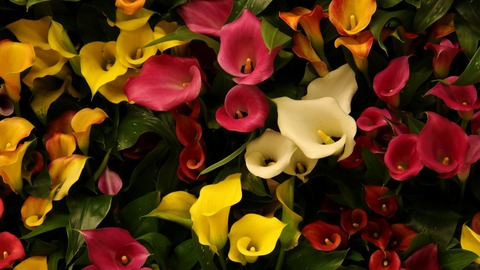 colorful_flowers_5k-1280x720