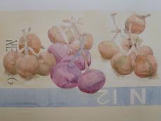 onion 477