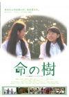 120205inochinoki