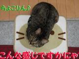 煌(東海道中猫栗毛)3.6キロ