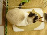 はーこ(猫馬鹿日誌)3.5キロ