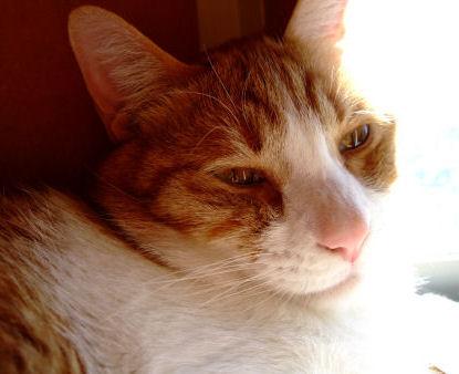 マル美猫風