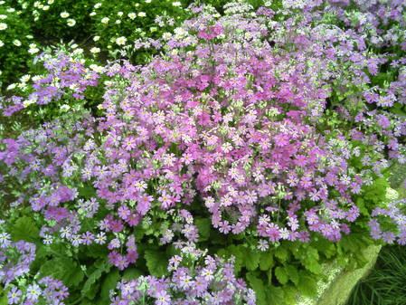 地元の公園の花