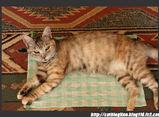 ホタル(猫ブログ「Line」)3キロ未満