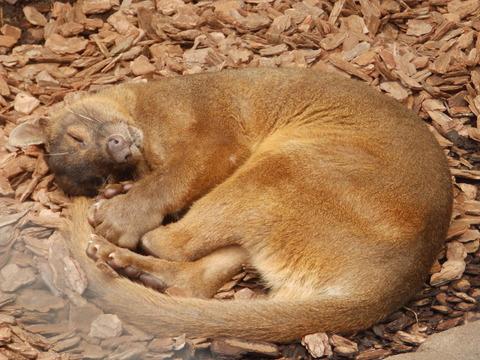 上野動物園1054_2