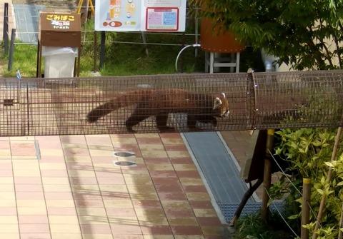 京都動物園3