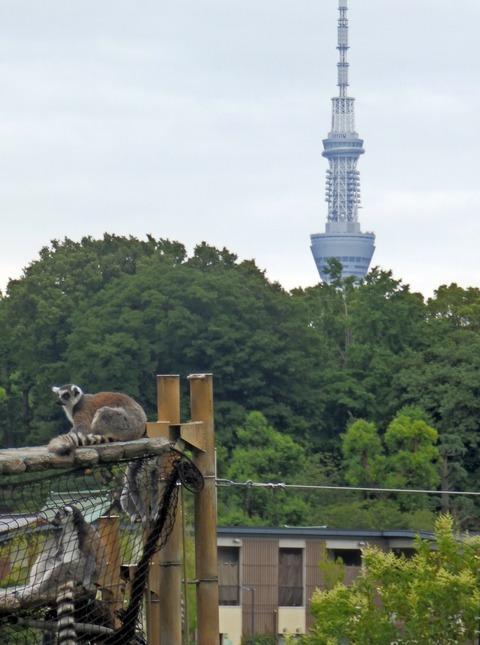 上野動物園1457_1