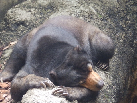 上野動物園1254_1