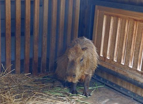 上野動物園1424_1