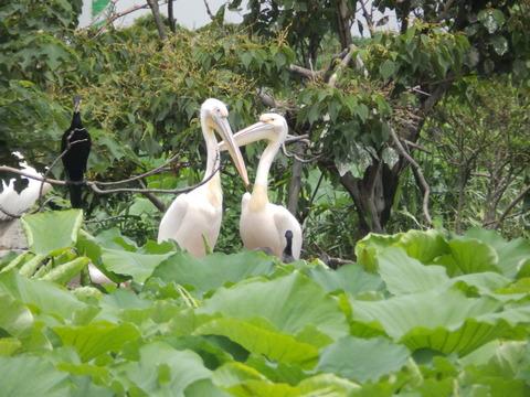 上野動物園1107_2