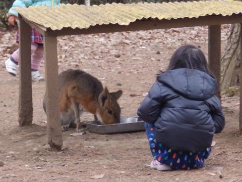 埼玉県こども動物自然公園5