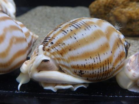 竹島水65