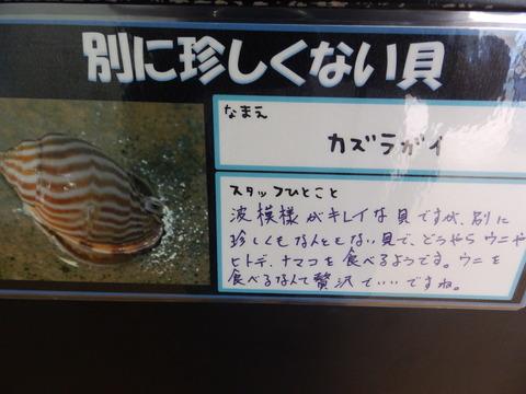 竹島水64