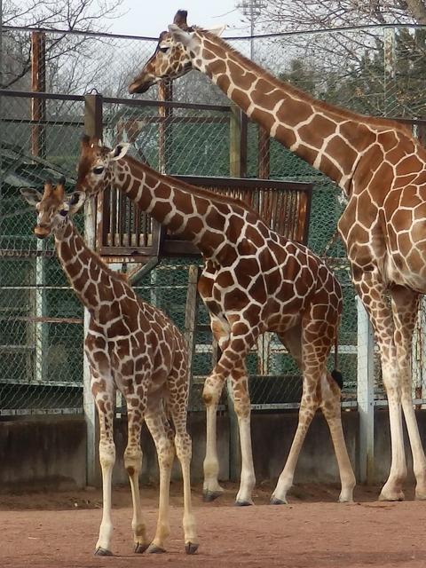埼玉県こども動物自然公園1
